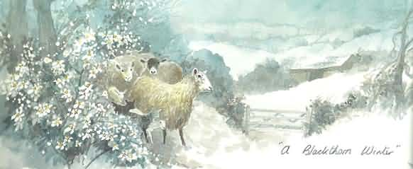 Winter scene in the Cotswolds