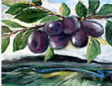 Pershore Purples Plums by Paul Bordiss
