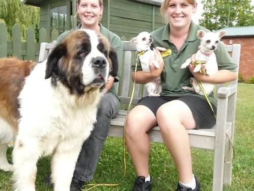 New residents at Evesham Dog Trust