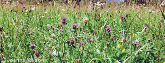 Species Rich Grassland Fields