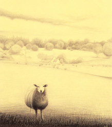 Meeting Harold the Cotswold Sheep by Richard Grassi