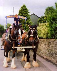 Westons Cider Brewers Dray