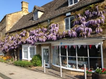 Wisteria time in the Cotswolds, Cotswolds.Info