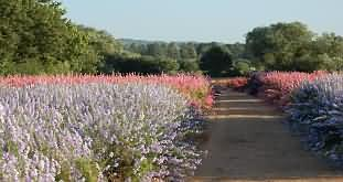 The Confetti Company growing delphiniums