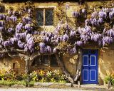 Cottage covered in Wisteria in Broadway