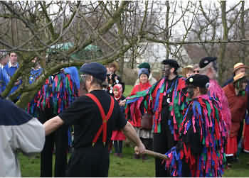 Wassailing a fruit tree
