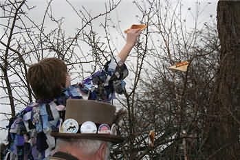 Toasted Bread being hung in fruit tree as part of the Wassailing ceromony