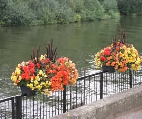 Riverside Flowers